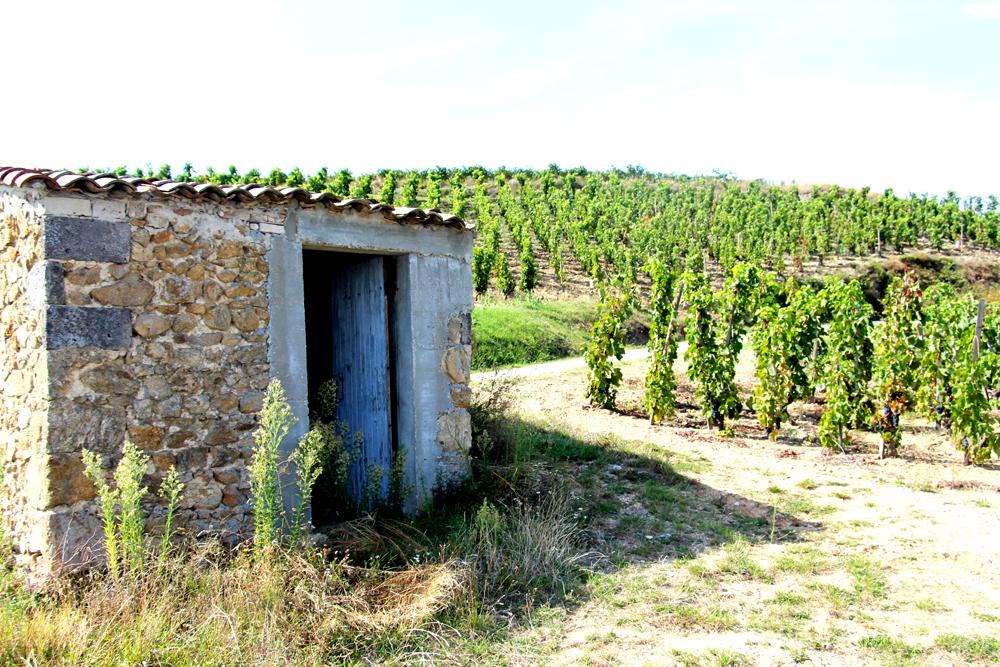 cabane ou maison de vigne