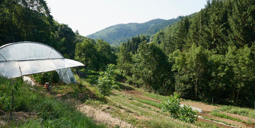 L'Automnal gourmand – Visite d'un jardin