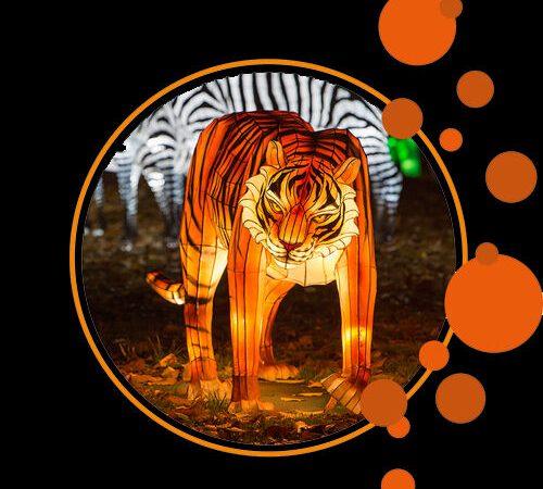 Festival des Lumières Sauvages