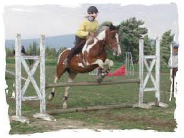 Concours de Sauts d'Obstacles à Sembadel