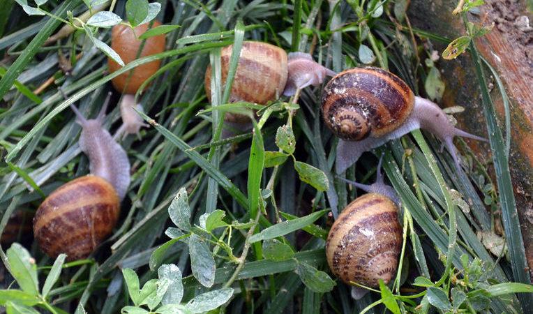 Visite et dégustation à l'Escargot d'Yssi
