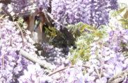 Le Jardin des Alchmilles