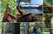 Bain de forêt – un temps pour soi
