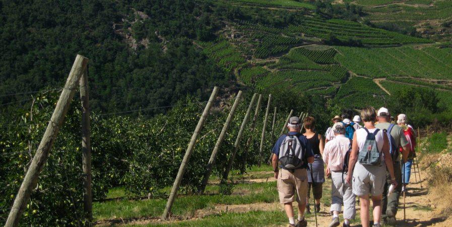 Fascinant Week-end – Randonnée découverte des vignobles
