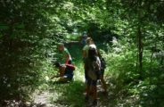 Découverte de la nature , randonnée , bain de forêt et bivouac