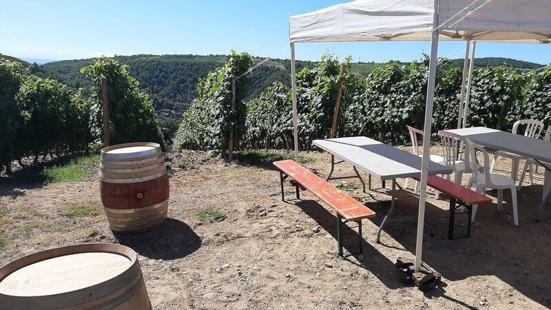 Brunch(di)vin au Domaine Mouton
